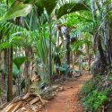 91. Path Vallee de Mai tour