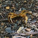 6. Crab in Praslin Vallee de Mai