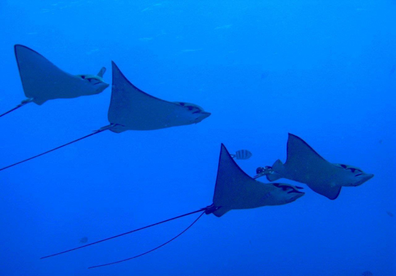 Diving Seychelles Mahe Praslin And La Digue Diving