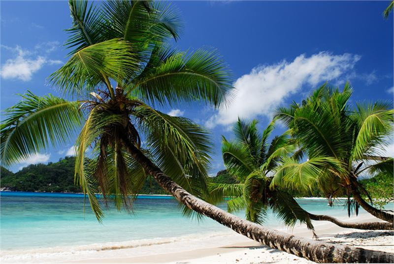 Tropical Beach Mahe