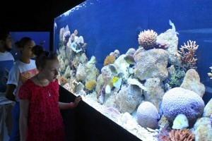 Eden Aquarium - photo by Joe Laurence, Seychelles News Agency