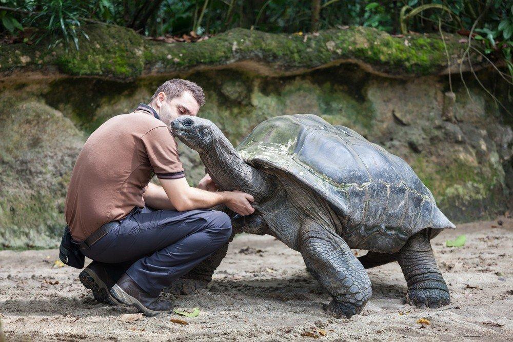 Giant tortoise Mahe Seychelles